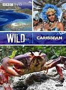 Divoký Karibik (2007)