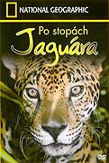 Po stopách jaguára (2003)