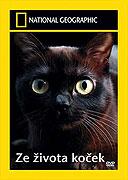 Ze života koček (2008)