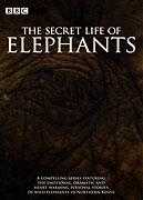 Tajemství slonů (2008)