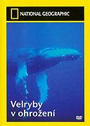 Velryby v ohrožení (2004)