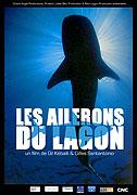 Alexandra Cousteau: Tváře žraloků (2008)