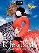 Ptačí svět (1998)